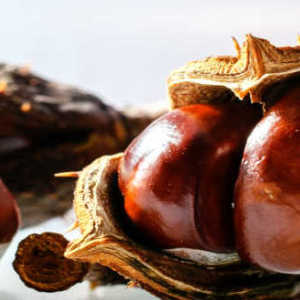 Horse Chestnut Benefits and Properties