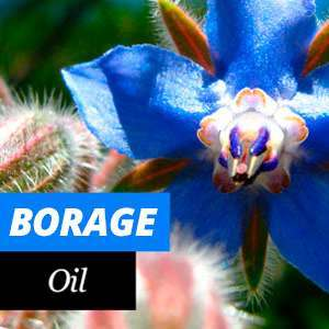 Borage Oil Benefits and Properties
