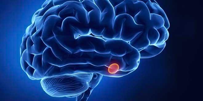 Mélatonine dans le cerveau