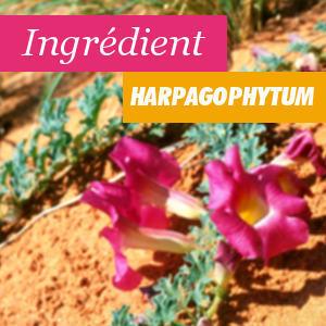 Propriétés et avantages de l'Harpagophyte