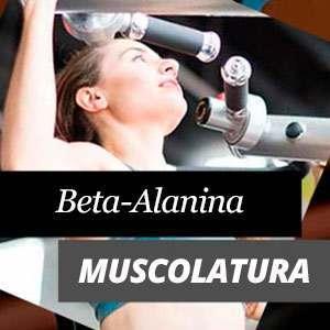 Beta Alanina e Muscolatura
