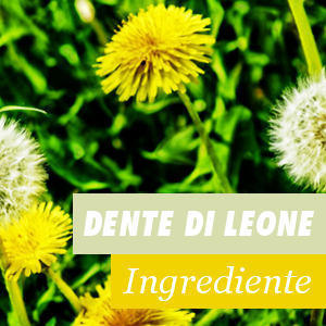 Dente di Leone - Benefici e Proprietà