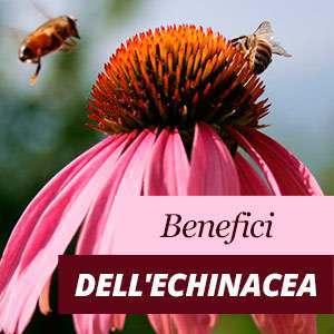 Echinacea - Benefici e Proprietà