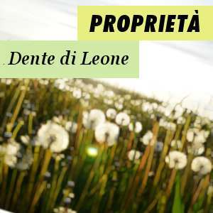 Proprietà del Dente di Leone
