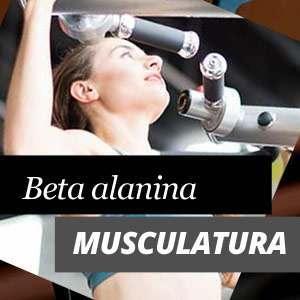 Beta Alanina e a musculatura