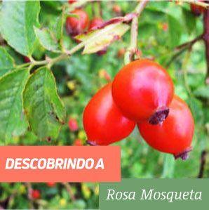 Rosa Mosqueta Benefícios e Propriedades