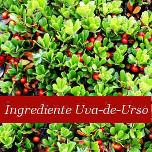 Ingrediente Uva Urso