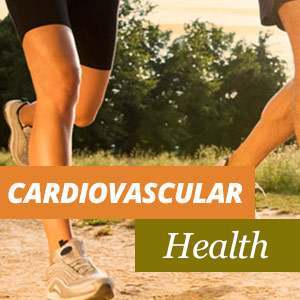 Everything about Heart Health