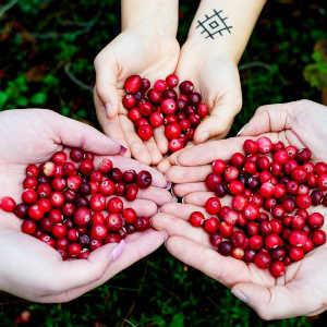 Mirtilo Vermelho, Benefícios e Propriedades