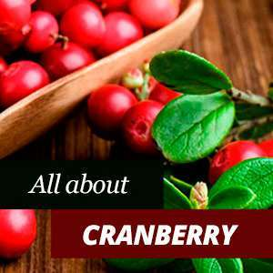 All about cranberry