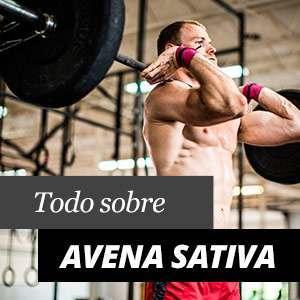 Avena Sativa - Beneficios y Propiedades