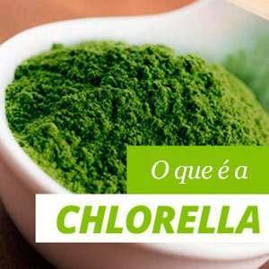 Tudo sobre a alga Chlorella