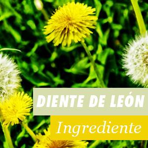 Diente de León - Beneficios y Propiedades