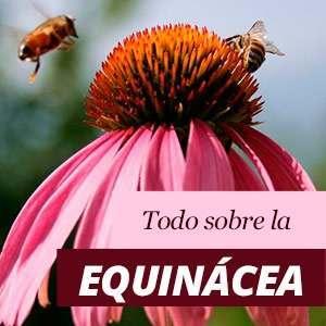 Equinácea - Beneficios y Propiedades