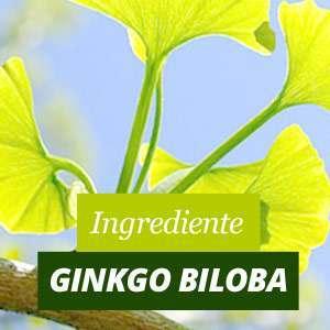 Ginkgo Biloba Beneficios y Propiedades