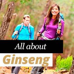 Everything about Ginseng