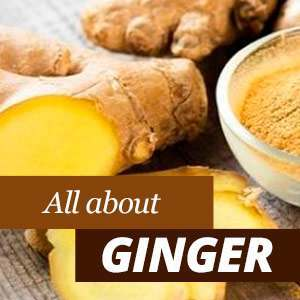 Everything about Ginger