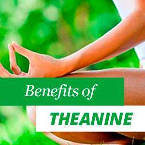 All about L-theanine