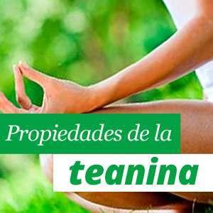 Teanina Beneficios y Propiedades