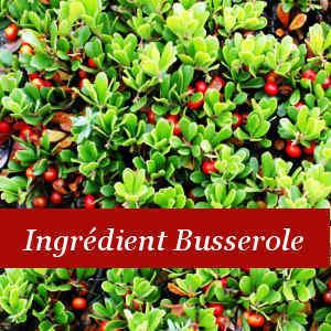Ingrédient Busserole