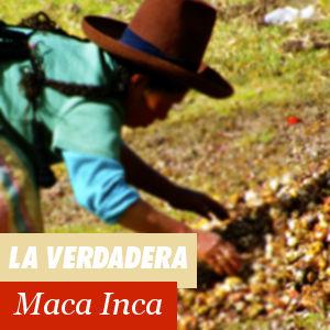 La verdadera Maca Inca