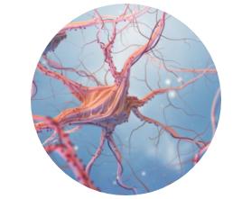 función neurológica y psicológica