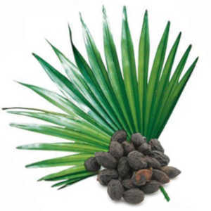 Saw Palmetto Benefits and Properties