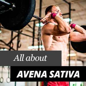 All about Avena Sativa